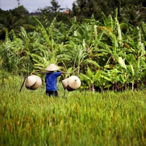 Villa Tukad Pangi - Rice Fields - Canggu, Bali