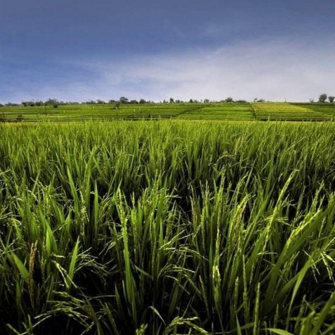 Villa Tukad Pangi - View of Rice Fields - Canggu, Bali