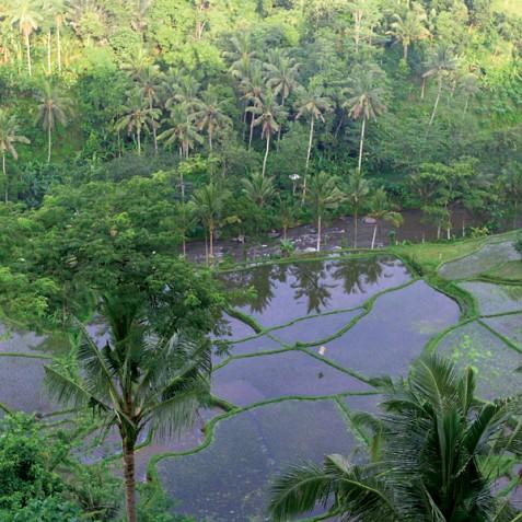 Villa Umah Tampih, Ubud, Bali - Rice Terraces