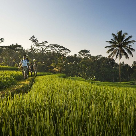 COMO Shambhala Estate, Bali - Rice Field Walks