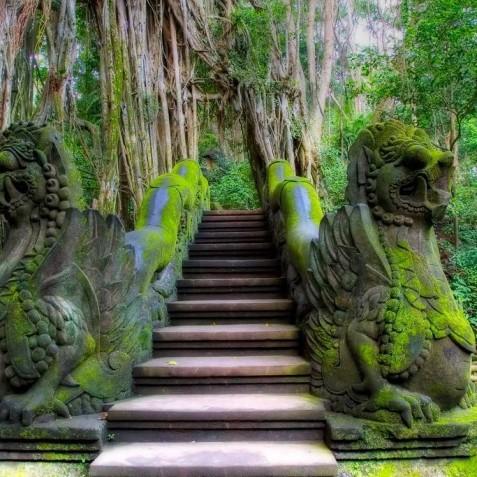Monkey Forest Sanctuary - Ubud, Bali, Indonesia