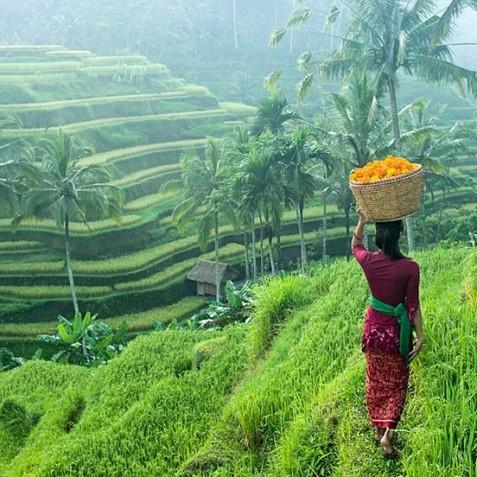 Ubud Rice Terraces - Bali, Indonesia