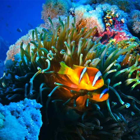 Marine Life - Luxury Yacht Charter, Bali, Indonesia