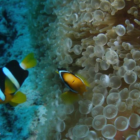 Zen Diving - Zen Resort Bali, Indonesia