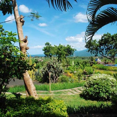 Gardens & Pool - Zen Resort Bali - Indonesia