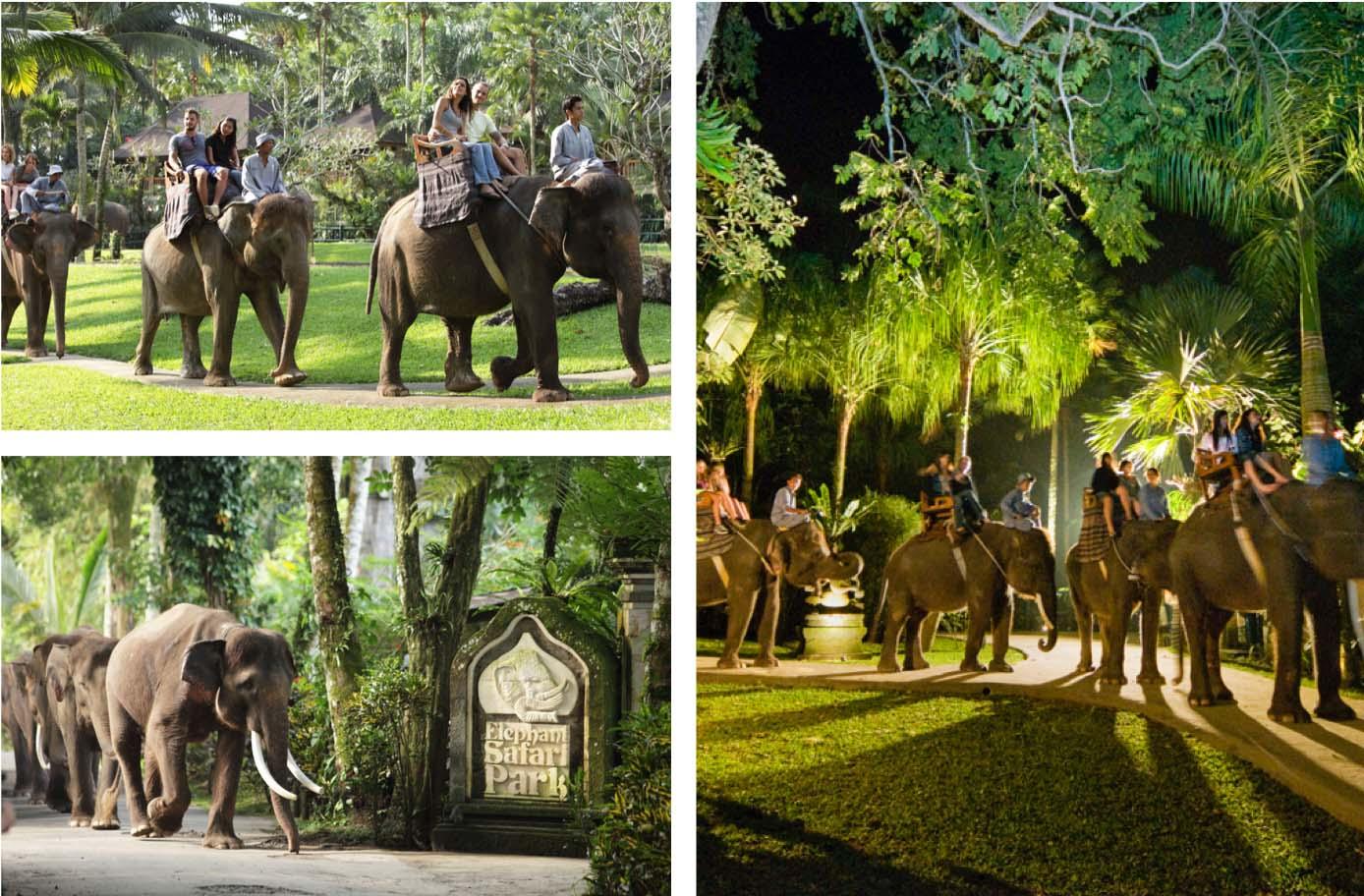 Elephant-Safari-Park