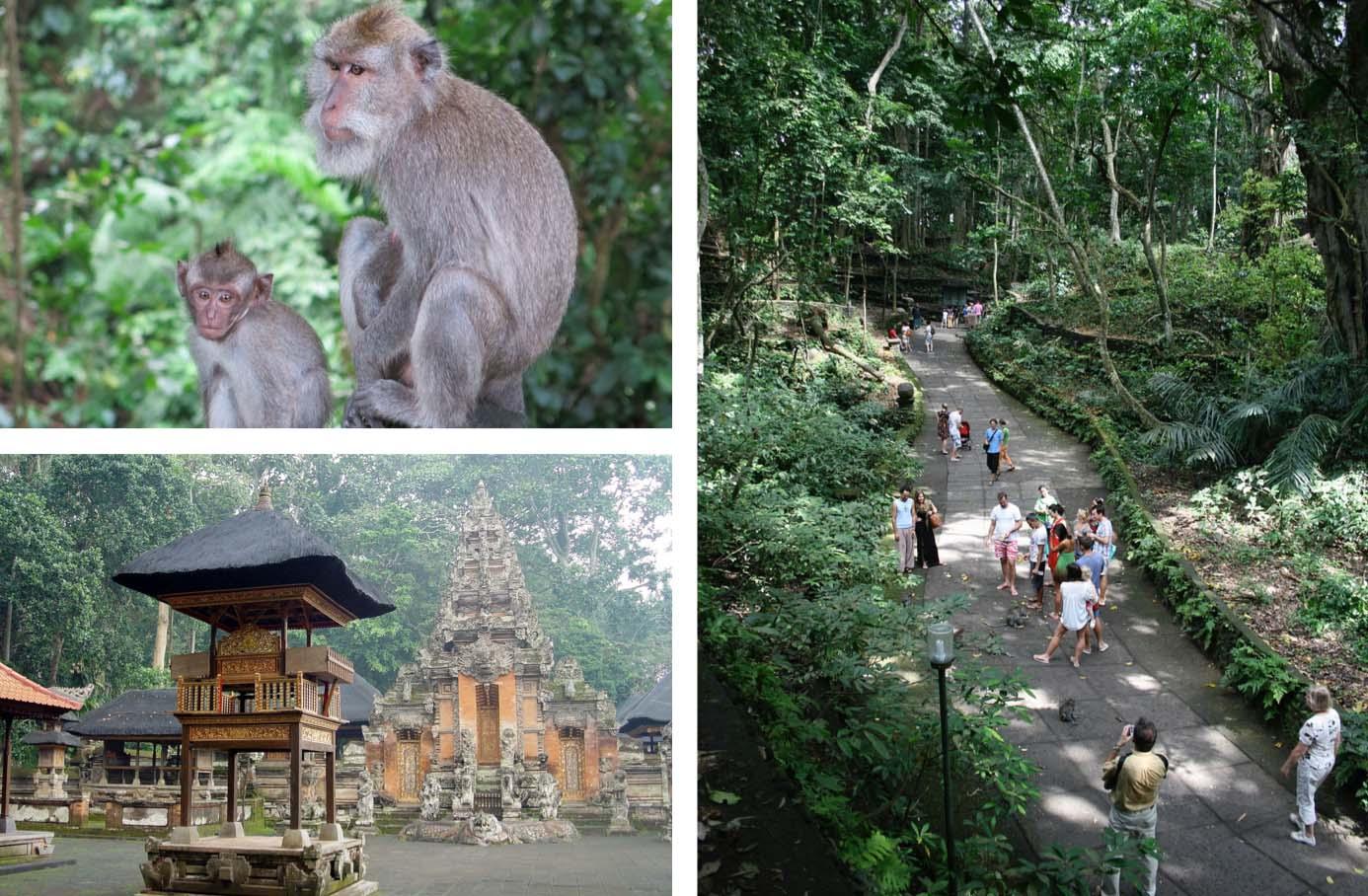 Monkey-Forest-Sanctuary-Ubud-Bali