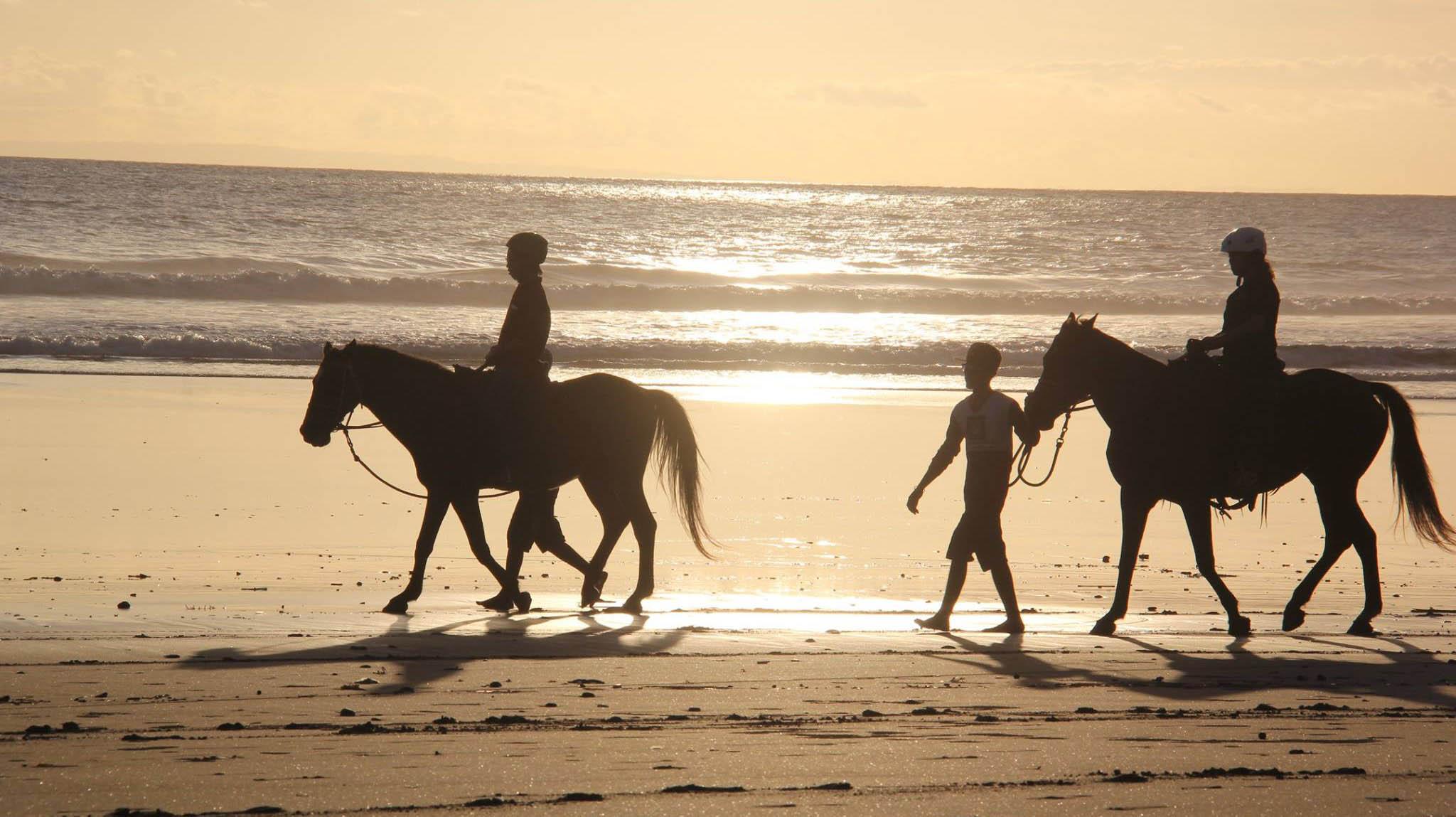 Bali-Island-Horse