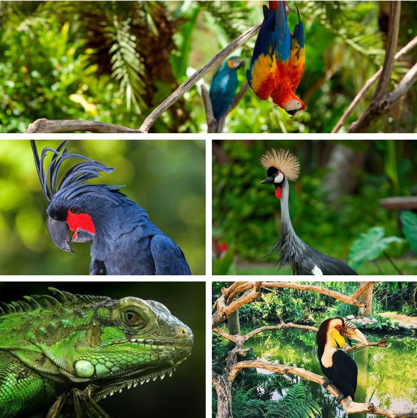 Bali Bird & Reptile Park - Bali's Wild Side - Animal Attractions