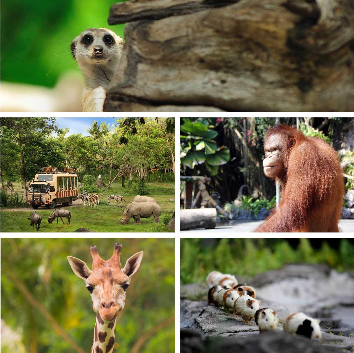 Bali Safari & Marine Park - Bali's Wild Side - Animal Attractions