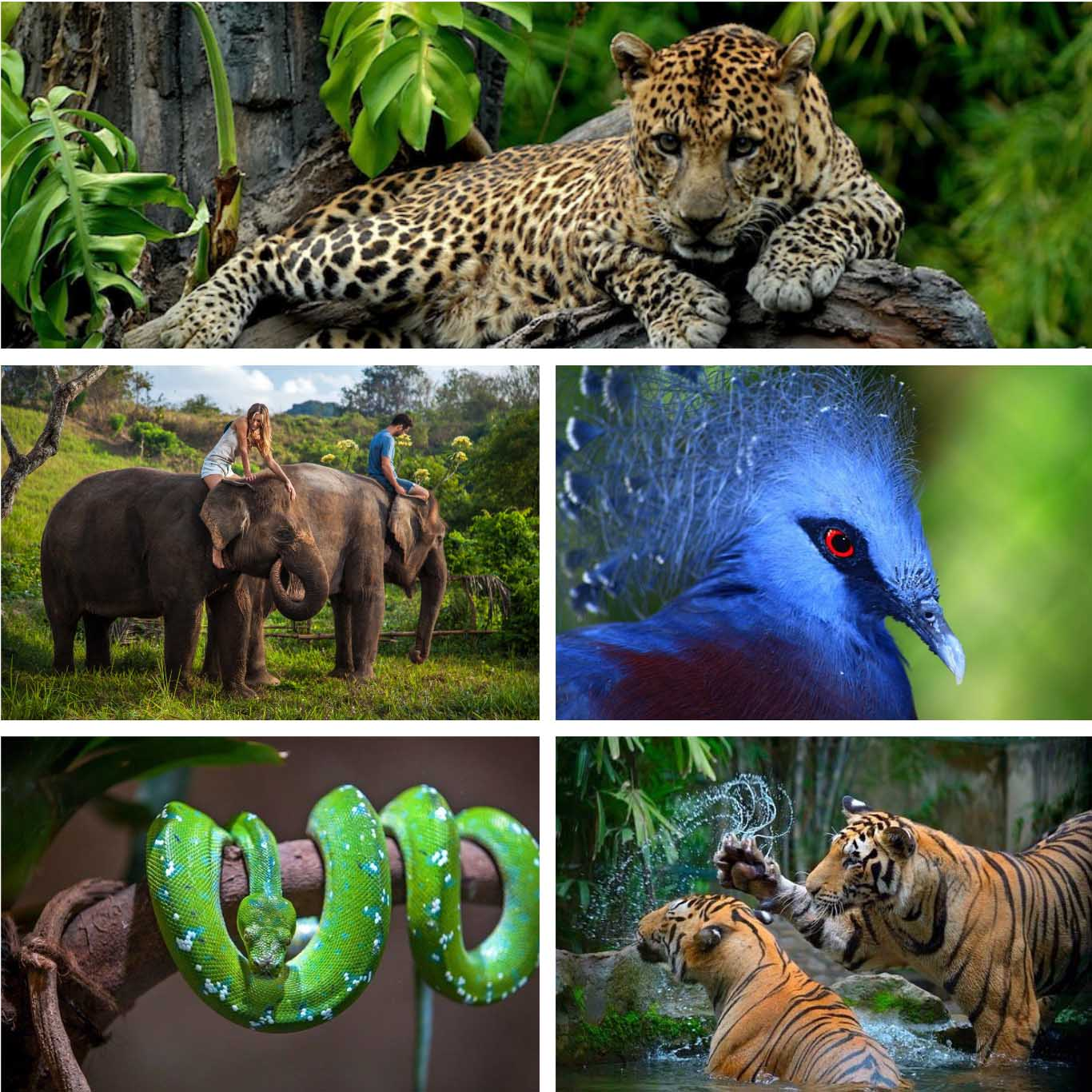 Bali Zoo - Bali's Wild Side- Animal Attractions