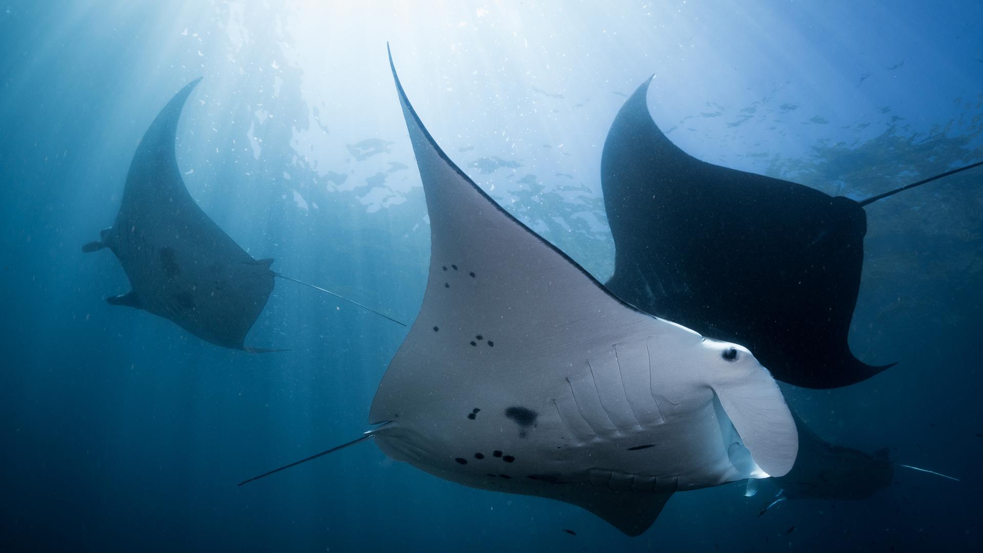 Best Diving Bali