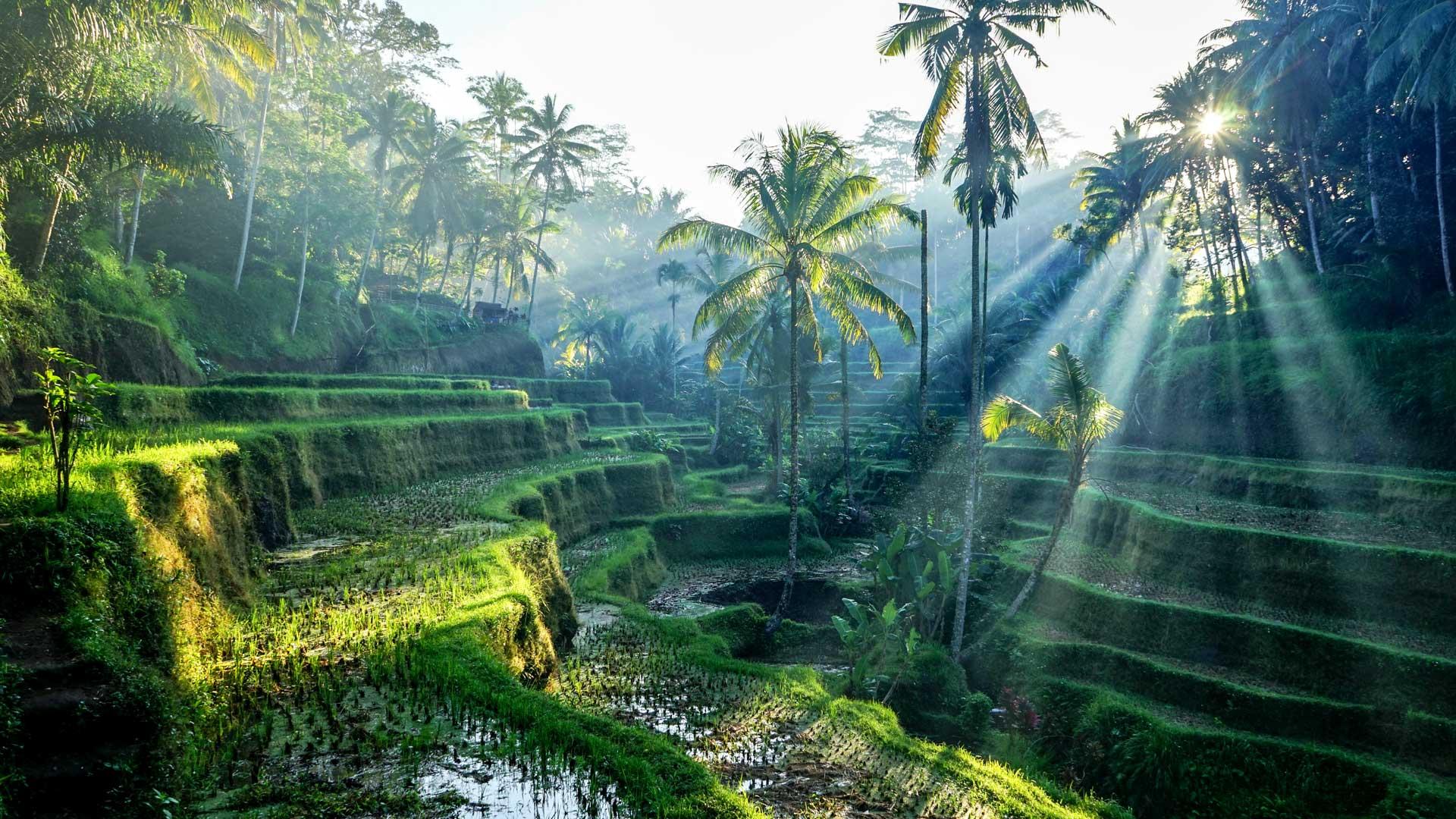 Ubud Travel Guide - Ultimate Bali