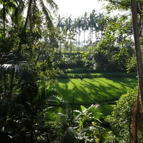 Villa Swarapadi, Ubud, Bali - Pool View