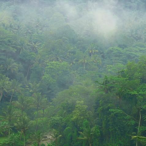 Villa Umah Tampih, Ubud, Bali - Jungle