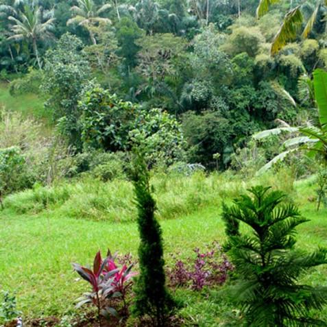 Villa Vajra, Ubud, Bali - Garden