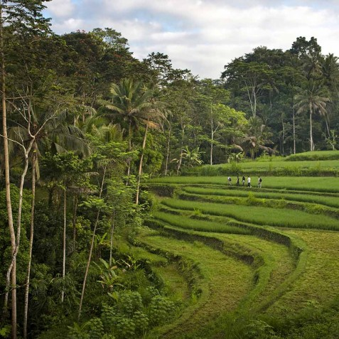 COMO Shambhala Estate, Bali - Rice Field Walks