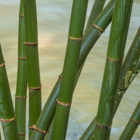 Fivelements Puri Ahisma, Bali - Ayung River Bamboo