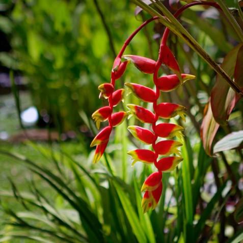 Villa Hibiscus, Sanur, Bali - Garden Flowers