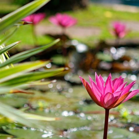 Villa Hibiscus, Sanur, Bali - Water Flowers