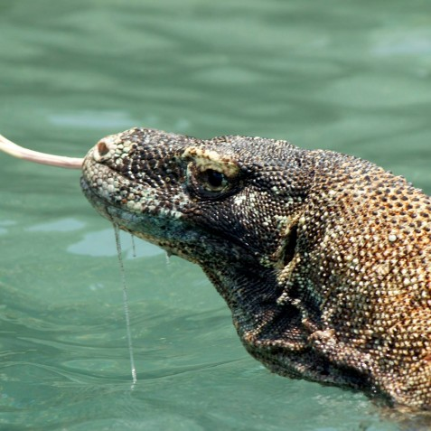 Komodo - Alexa Private Cruises - Luxury Charter Yacht - Indonesia