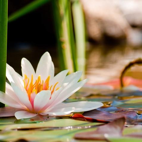 Lotus Pond - Bali Vitality Detox Retreats - Ubud, Bali, Indonesia