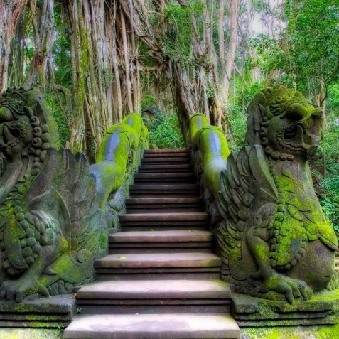 Monkey Forest Sanctuary - Ubud, Bali, Indonesia